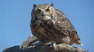 120407 Owl