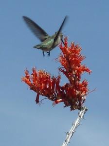 Evolve to Survive_hummingbird