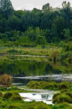 papaitonga-wetland1